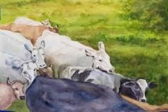 """Doreen Boyer DeBoth's Ten Grazing Cows, 19"""" x 23.5"""", $850"""