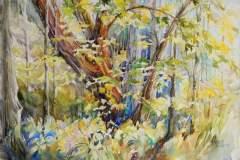 """Jennifer Koury, Into the Woods, Chestnut Ridge Park, 15"""" x 22"""" image"""